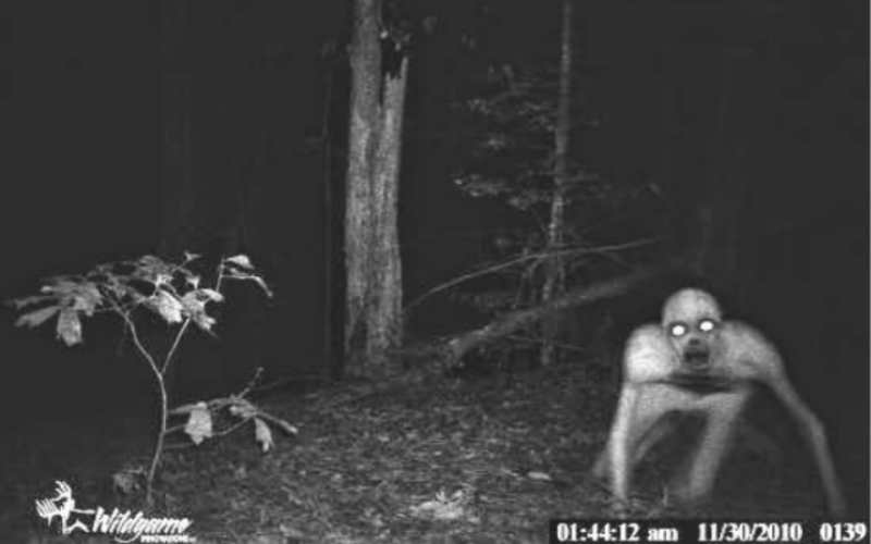Самые жуткие существа, попавшие в объектив камеры