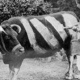 Странные факты и фотографии Второй мировой войны