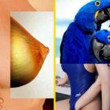 Оскорбительные и красивые коллажи Наро Пиноза