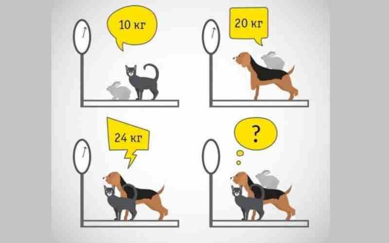 Тест: Определите вес животных