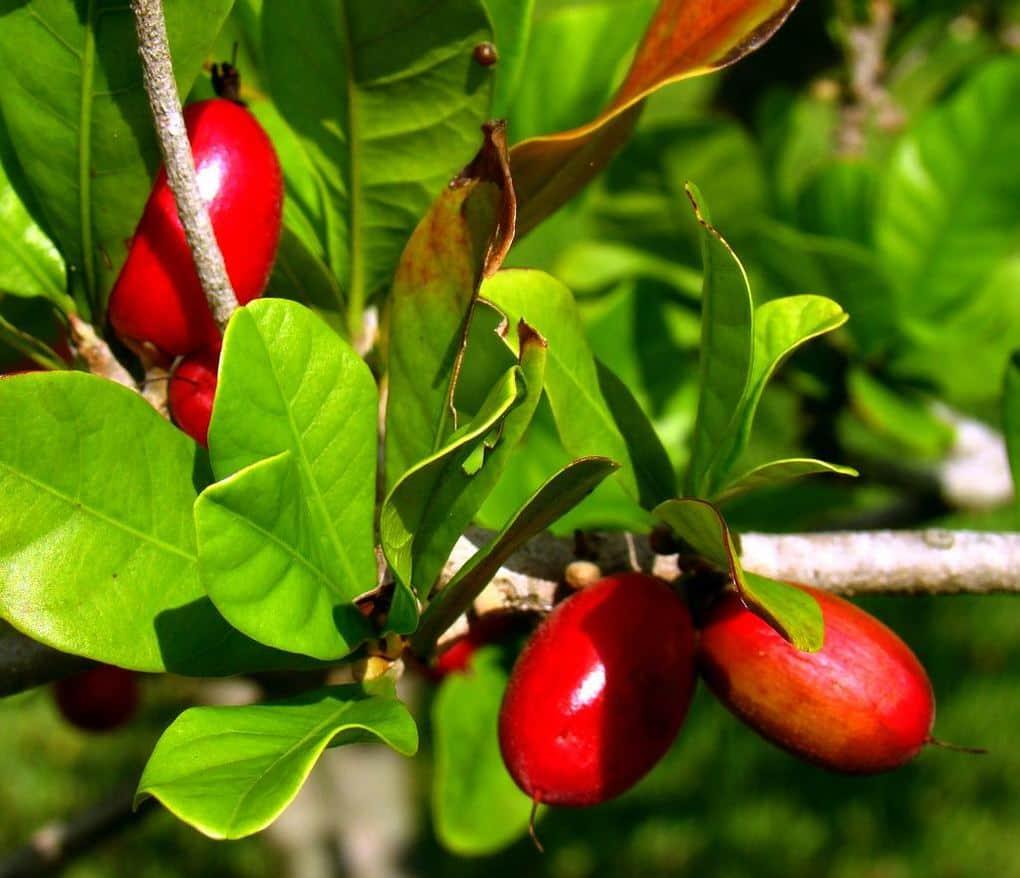2. Магический фрукт