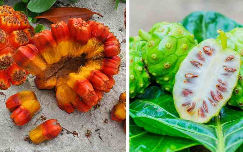 16 самых экзотических фруктов