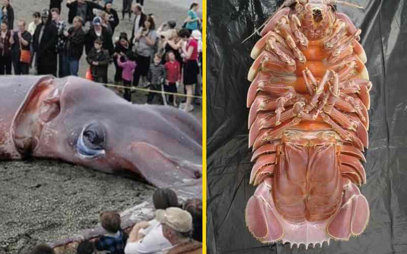 25 самых больших животных в мире, от слона до паука