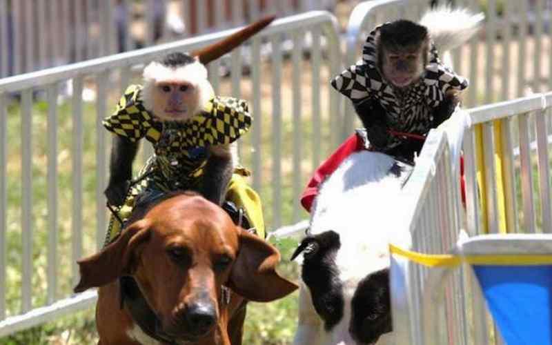 9 самых нелепых и откровенно странных соревнований