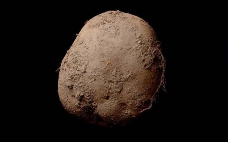 Эту фотографию картофелины продали за 1 млн. евро!!!