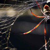 Как паук плетет свою паутину (Видео)