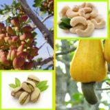 Как выглядят 19 популярных продукта до сбора урожая