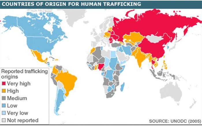 organ traficking