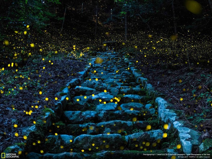 Светлячки в отдаленной японской деревне. Фото: Yutaka Takafuji