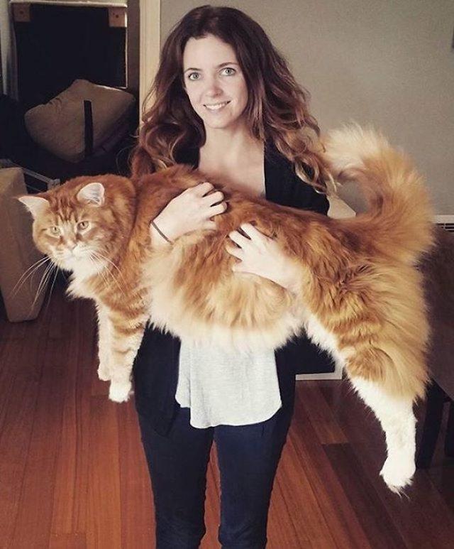 3. «Мы предполагали, что он может быть самым длинным котом, но ничего не делали, чтобы зафиксировать рекорд» — говорит Стефани
