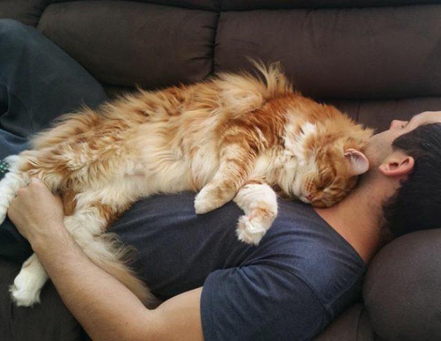8. … Поглощение кошачьего корма, ленивый дневной сон на улице, а также небольшое количество сырого мяса кенгуру на ужин в качестве деликатеса