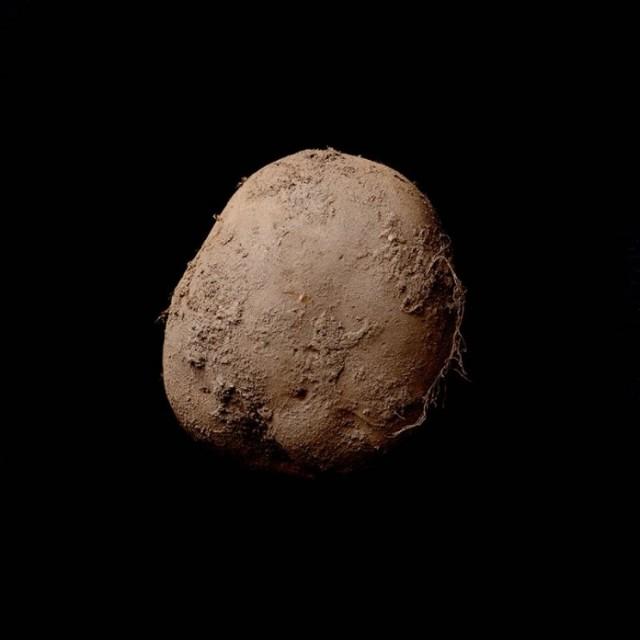 "фотография ""Potato #345 (2010)"