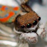 10 мифов о животных, в которые пора перестать верить
