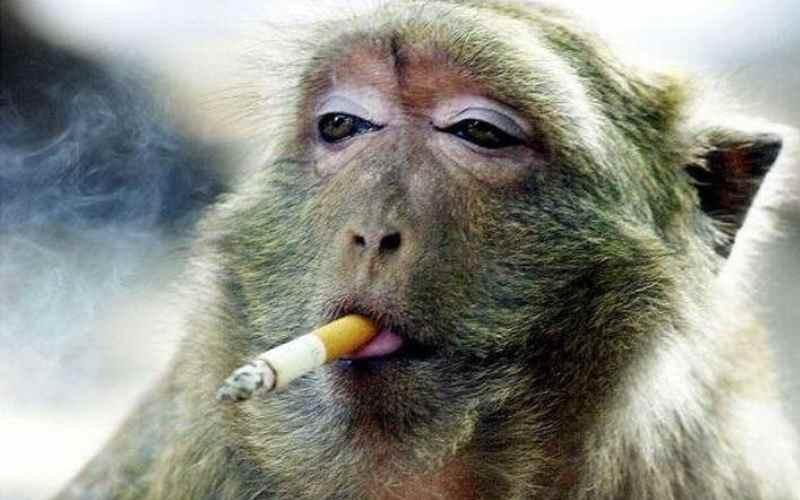 15 интересных фактов о табаке и курении