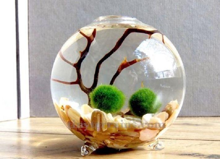 2. Японский мох маримо (Marimo moss balls)