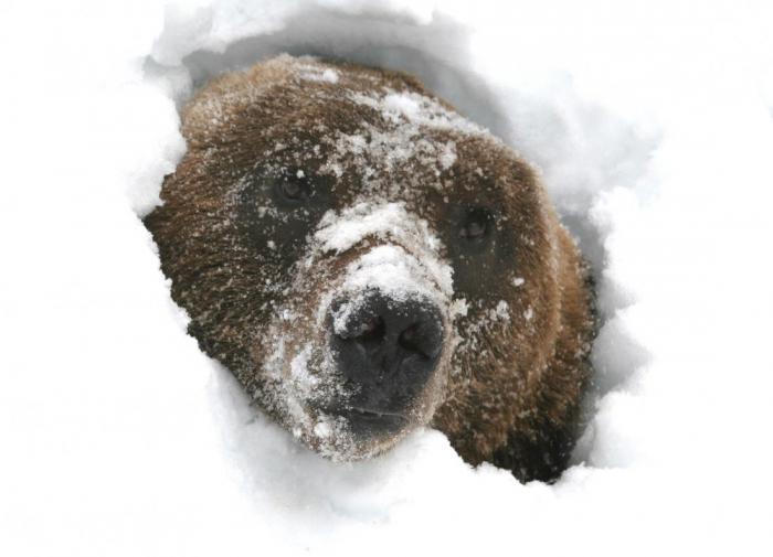 Тайны спящего медведя