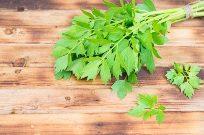 Листья сельдерея