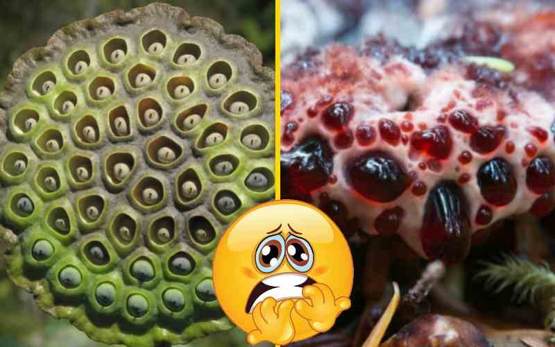 15 растений из ваших ночных кошмаров