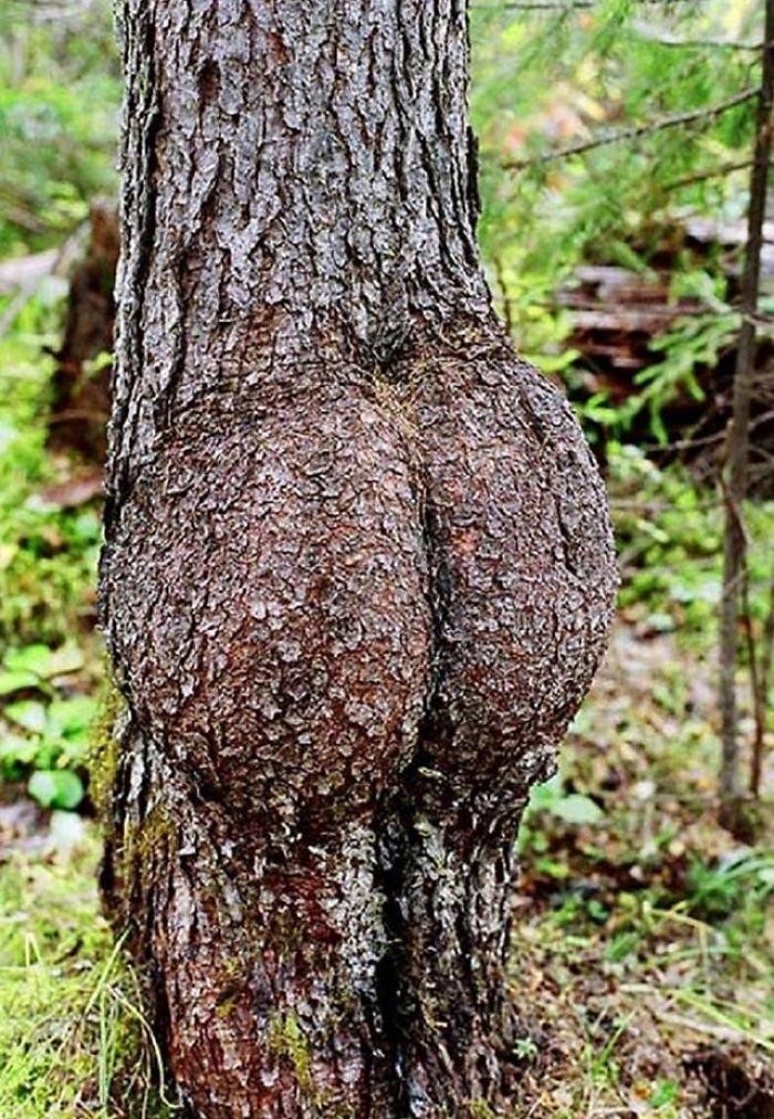 Секс в деревя