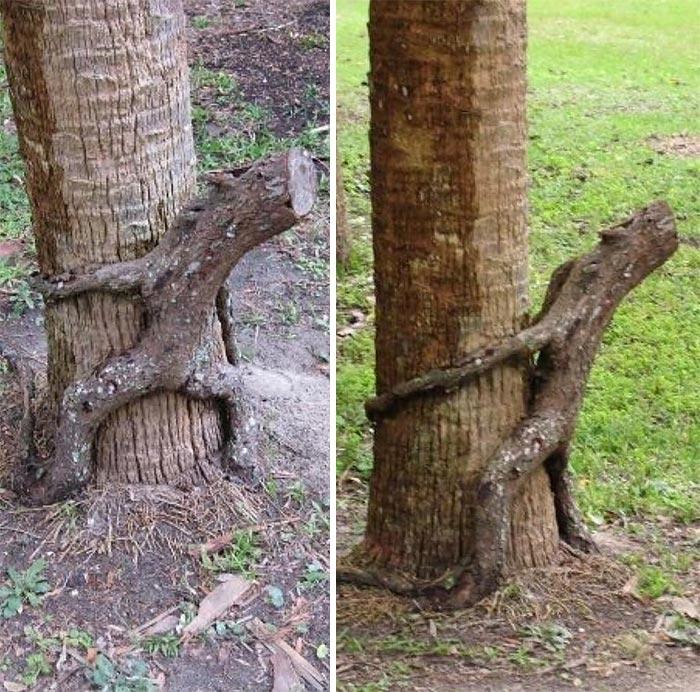 трахнул дерево фото - 14