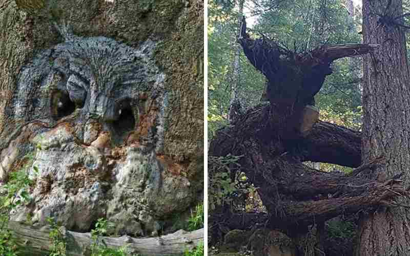 25 необычных деревьев, которые похожи на нечто другое