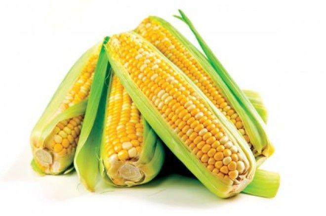 Современная кукуруза