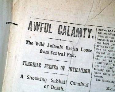 Побег животных из зоопарка