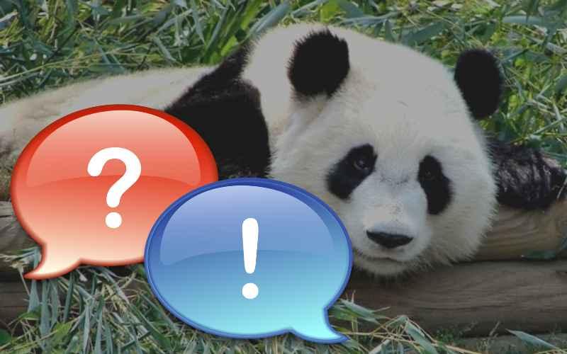 Интересные вопросы о животных с ответами