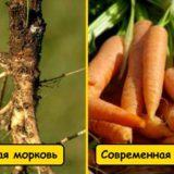 Как привычные нам овощи и фрукты выглядели раньше