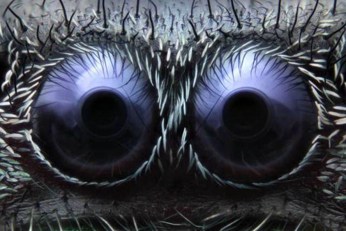 Глаза паука под микроскопом
