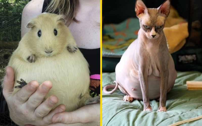 25 забавных беременных животных, которые поднимут вам настроение