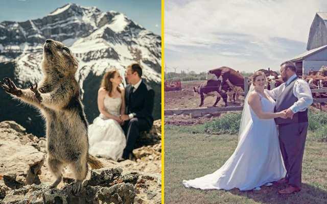 40 самых забавных свадебных фото