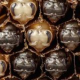 Первый 21 день жизни пчелы за 60 секунд