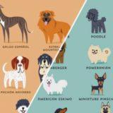 географическое происхождение своей собаки