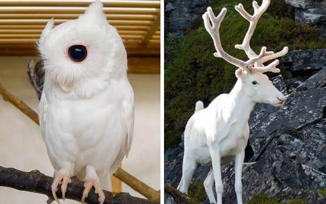 Редкие животные альбиносы, абсолютно белые и невероятно уникальные