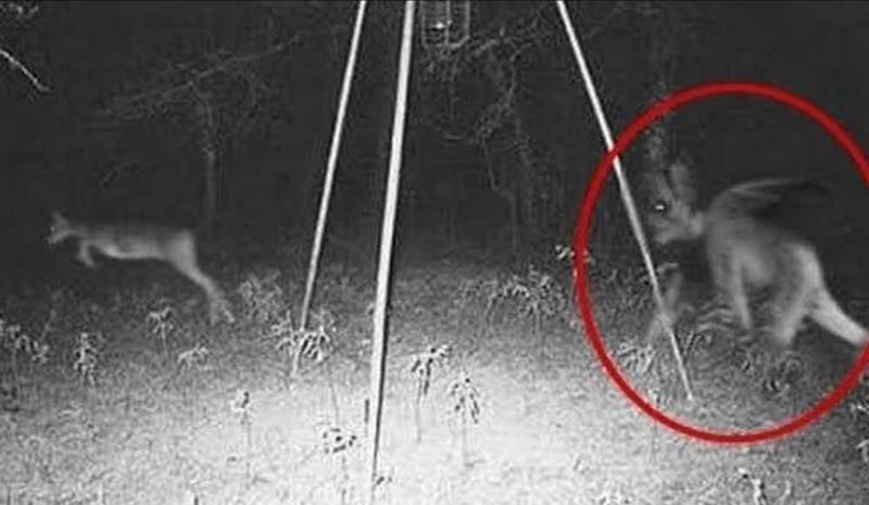 За оленем гонится дьявол из Джерси