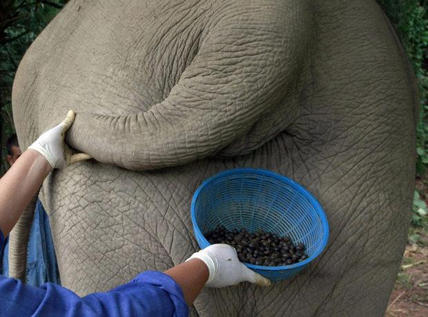 """Самый дорогой кофе Black Ivory """"Черная Слоновая Кость"""""""