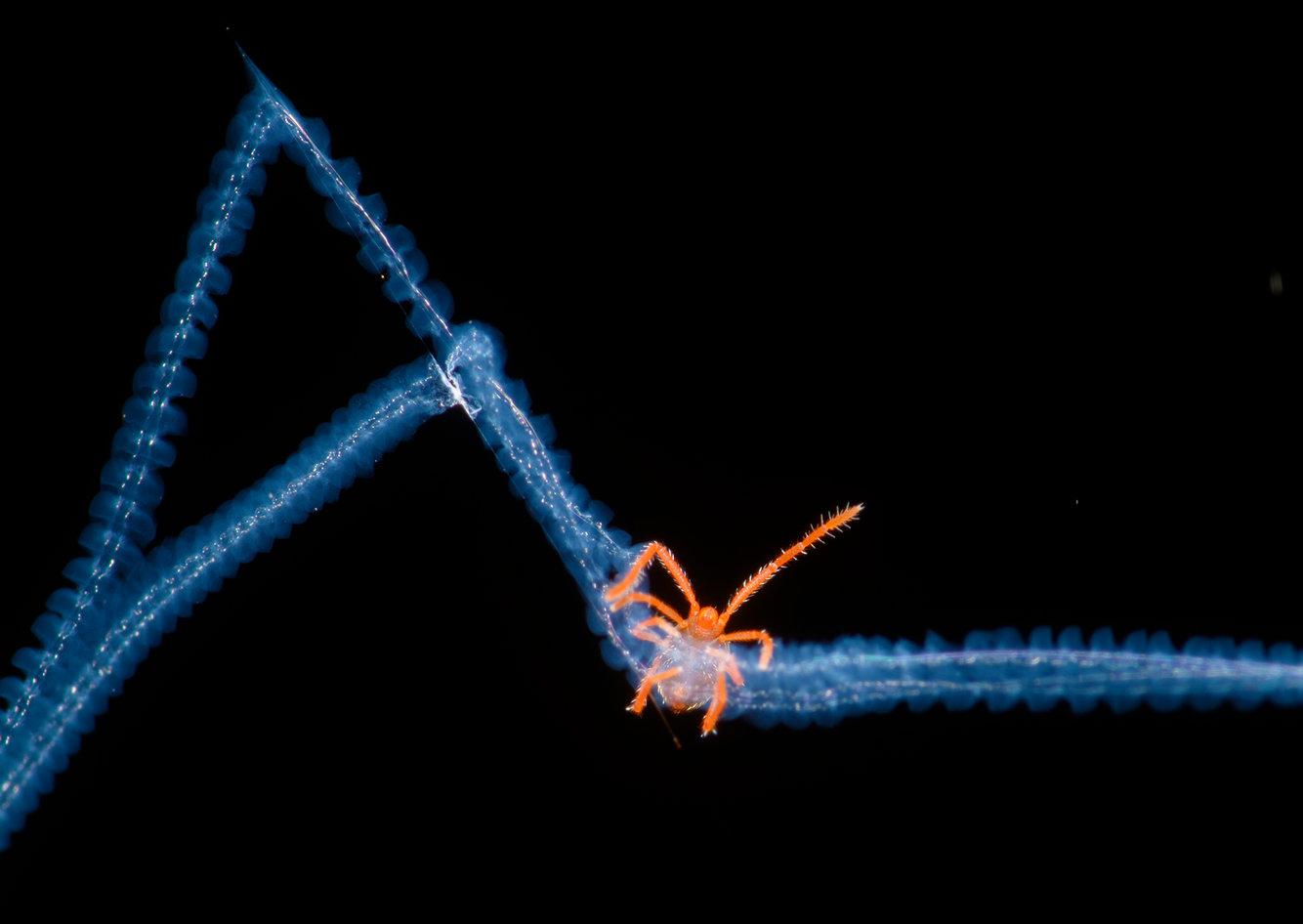 крошечный акари попадает в ловушку голубоватой паутины