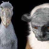 Фотографии животных находящихся на грани исчезновения