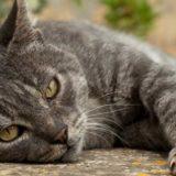 Какие еще факты мы не знаем о кошках
