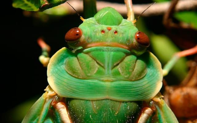 10 самых громких животных в мире