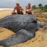 15самых больших животных на Земле