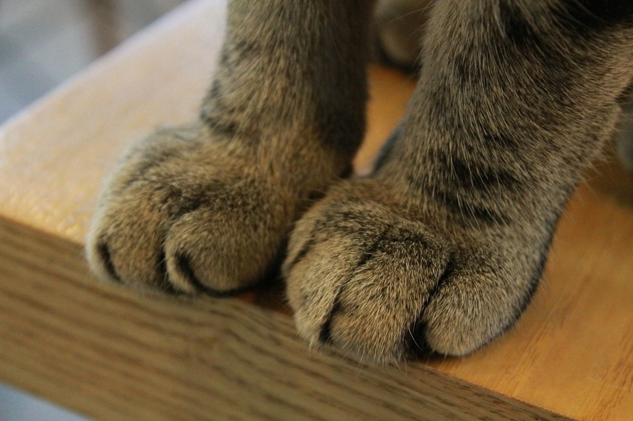 Коты потеют лапками
