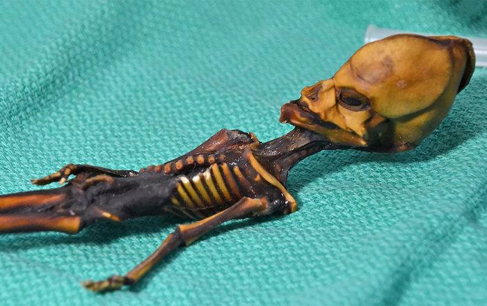 Скелет «атакамского гуманоида», обнаруженный в Чили