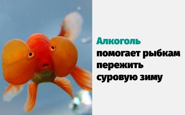 Удивительные факты о животных, которые поразили даже ученых-min