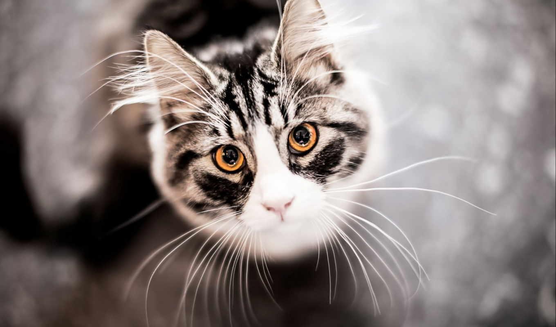 Усы кошки действуют как чувственные рецепторы