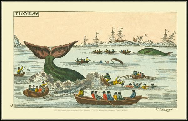 спрос на китовый жир