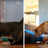 сравнение поведения кошки и собакина разыгранную смерть
