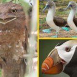 12 самых необычных птиц в мире