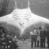 16 огромных животных в сравнении с человеком